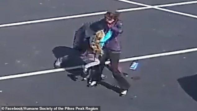 حمله هولناک سگ وحشی به دختربچه ۵ ساله +عکس و فیلم