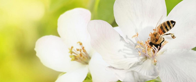 10 خواص گرده گل و نحوه مصرف و نگهداری آن