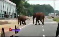 هجوم ناگهانی فیلها اتوبان را بست +فیلم